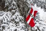 "Santa Stocking by James ""BO"" Insogna"