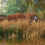"""pond cattail weeping willow"" by rchristophervest"
