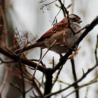 Bird On Branch OPE