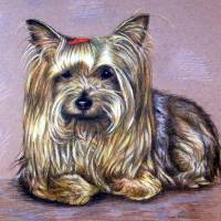 Yorkshire Terrier Art Prints & Posters by Nicole Zeug