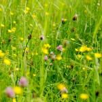 """""""Meadow"""" by jdm"""