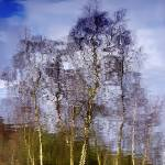 """""""ReflectiveTrees"""" by jdm"""