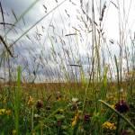 """""""Meadow3"""" by jdm"""