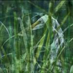 """Secretive Egret"" by ChristopherByrd"