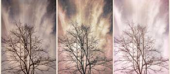 Winter Solstice Tryptic