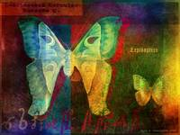 lepidoptera, moth and butterfly