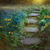 the garden path by r christopher vest