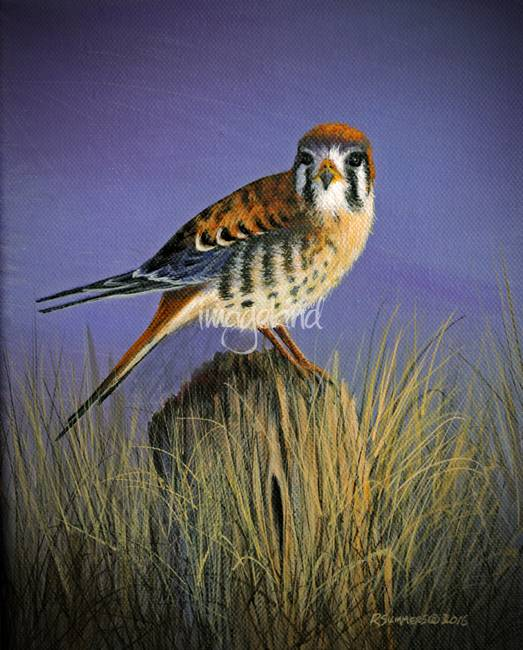 "Realism ""Kestrel"" Artwork For Sale on Fine Art Prints"