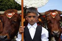 Boy and oxen