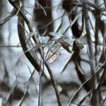 """Silver Leaf Alone"" by SplitWindow"