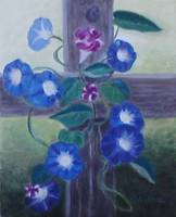 Morning Glories on Fencepost
