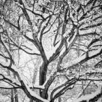 """Snowy Winter Intertwine"" by lightningman"