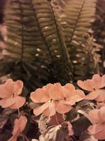 Pastel Pink Flowers and Ferns Subdued