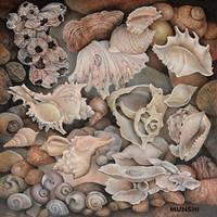 Shells Art Prints & Posters by CAROLE MUNSHI