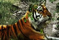Inquisitive Tiger