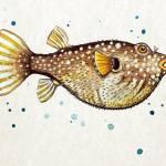 """""""PufferFish"""" by Littlepig"""