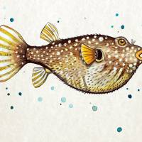 PufferFish in Watercolor Art Prints & Posters by Cheryl Marie