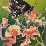 """""""pride of barbados with butterfly"""" by Dennisartist"""