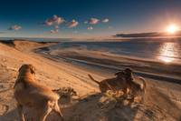 Dogs Watching Sunset Cape Cod National Seashore