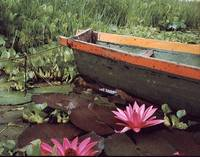 colombian-boat-and-flowers-lawrence-costales