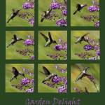 """Hummingbird collage Green Garden 2016_IMG_1077-87"" by KsWorldArt"