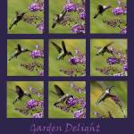 """Hummingbird collage purple Garden 2016_IMG_1077-87"" by KsWorldArt"