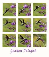 Hummingbird collage Garden 2016_IMG_1077-87