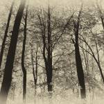"""Fall Trees 2012_IMG_3087.Nik.skylt.AntPlate"" by KsWorldArt"