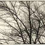"""Winter Tree 2012_IMG_1150.1Nik.Silv.Yeld"" by KsWorldArt"