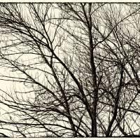 Winter Whispers Art Prints & Posters by Karen Adams