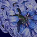 """""""HyacinthCurls3ikIMG_1986"""" by LyndaLehmann"""