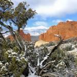 """""""Rattlesnake ridge tree vert"""" by sonnyhoodphotography"""