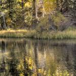 """Day 13 - Rush Creek - Aspen Reflections 1"" by Gold41"