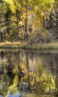 Day 13 - Rush Creek - Aspen Reflections 1