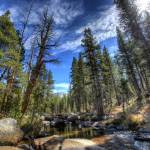 """Day 10  - Tuolumne River View 2"" by Gold41"