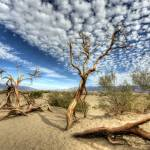 """""""20x16 - Day 4 - Mesquite Dunes"""" by Gold41"""