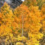 """Day 19 - Aspen Mist"" by Gold41"