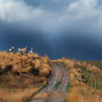 side road with pronghorn idaho Art Prints & Posters by r christopher vest