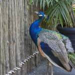 """""""20150908-Cape_May_Zoo-142500_caption (2)"""" by MichaelLewis"""