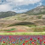 """The flowering of Castelluccio in front of Mount Ve"" by luigimorbidelli"