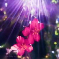Lightstreams and Pink Art Prints & Posters by John Corney