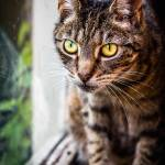 """""""IMG_1249"""" by UpcomingChris"""