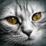 """""""white cat face"""" by rogueart"""