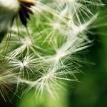 """""""dandelionhair"""" by RandyB30"""