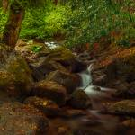 """""""Whiskeytown Falls Trail 201320120101_0013"""" by Michele"""