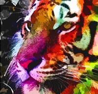 Tiger Multicolored