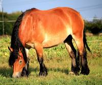Grazing Horse Wildlife Wall Art