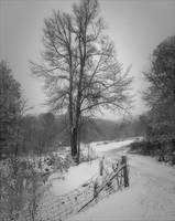 """""""Between the Seasons"""" by Joe Gemignani"""