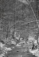 """A Snowy Day at the Creek"" #1 by Joe Gemignani"
