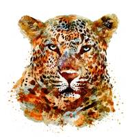 Leopard Head Watercolor